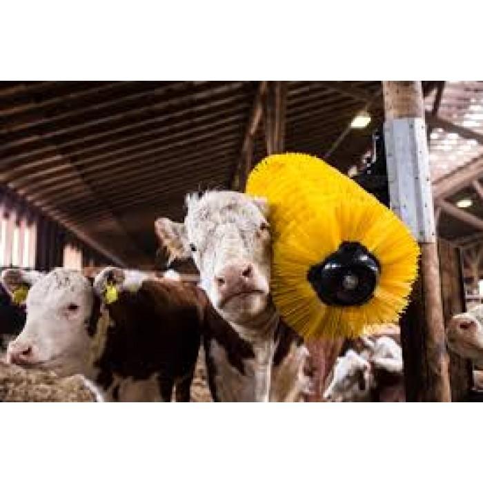 Koryktborstar, för djur i alla storlekar