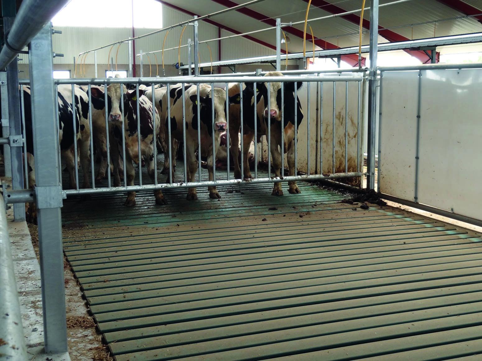 Grind separation för boskap